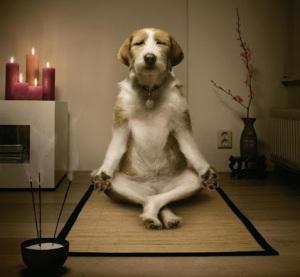 dog-meditation